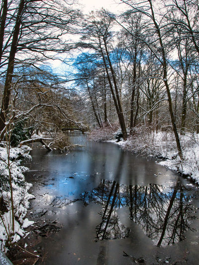Bare trees by lake in forest during winter