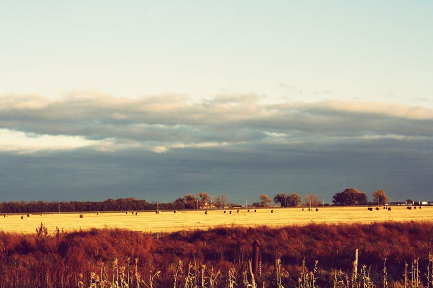 Agriculture Landscape Outdoors Sky canadaBeauty In Nature Haybales  manitoba