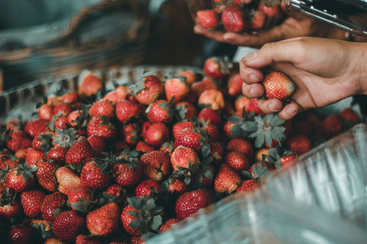 The famous strawberries of Baguio city, Philippines. Baguio Philippines La Trinidad, Benguet Philippines Strawberry Strawberries Farm Human Hand One Person People Business Finance And Industry Freshness Fruit Market Food And Drink Healthy Eating Lifestyles Healthy Lifestyle EyeEmNewHere The Traveler - 2018 EyeEm Awards My Best Travel Photo