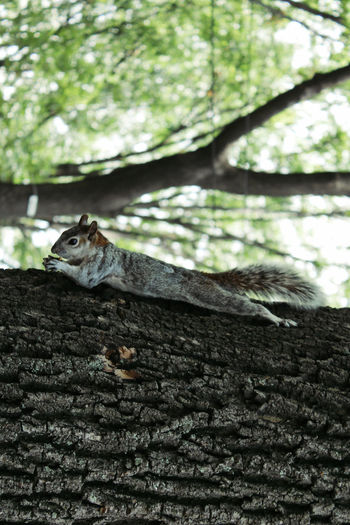 Side View Of Squirrel On Tree Trunk