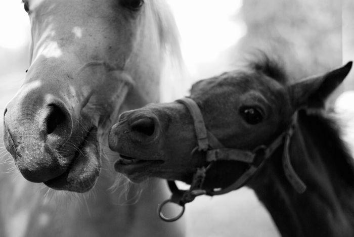 Animals Arabian B&w Blackandwhite EyeEm EyeEm Gallery Family Fine Art Photography Foal Hanging Out Hello World Horse Horses Light And Shadow Mono Monochromatic Monochrome Nature Nikon Parenthood Parents Stables The Week On Eyem