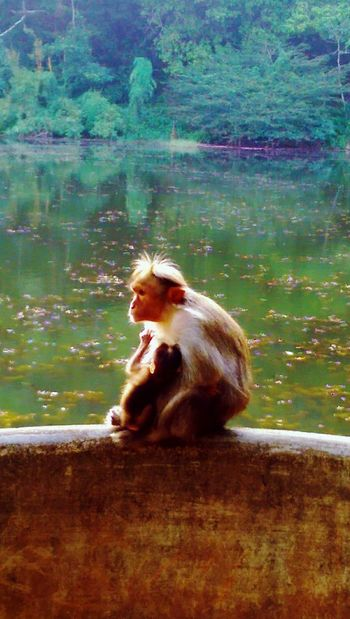 Animals In The Wild Mammal Animal Themes Monkey Water Nature Animal Wildlife One Animal Sitting Primate Outdoors Zoo Hot Spring Day No People Orangutan Natural Parkland Taking A Bath Baboon Mothers Love Monkeybusiness  Monkeys Monkeybusiness  Eyem Nature Monkeybusiness