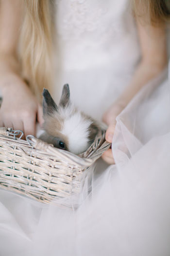 Midsection Of Woman Holding Rabbit In Basket
