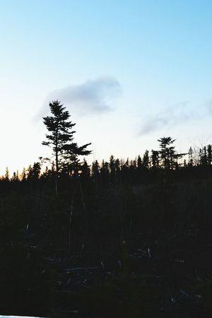 i love this Eva Filter .. Trees Taking Photos Iloveit