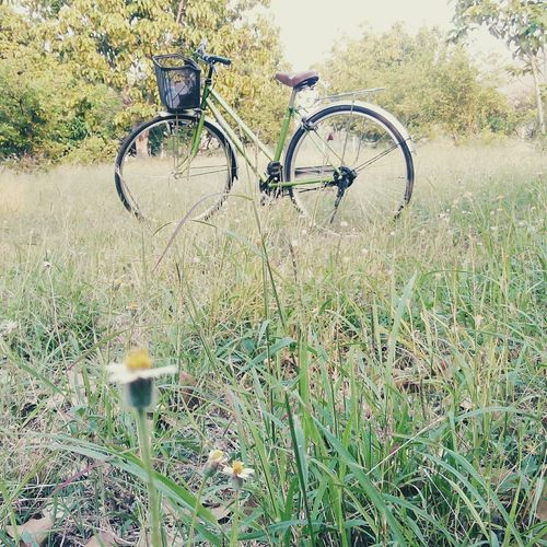 เที่ยวสวน 🌾🌽🌴🍏🌸🌻⛅🌞 First Eyeem Photo
