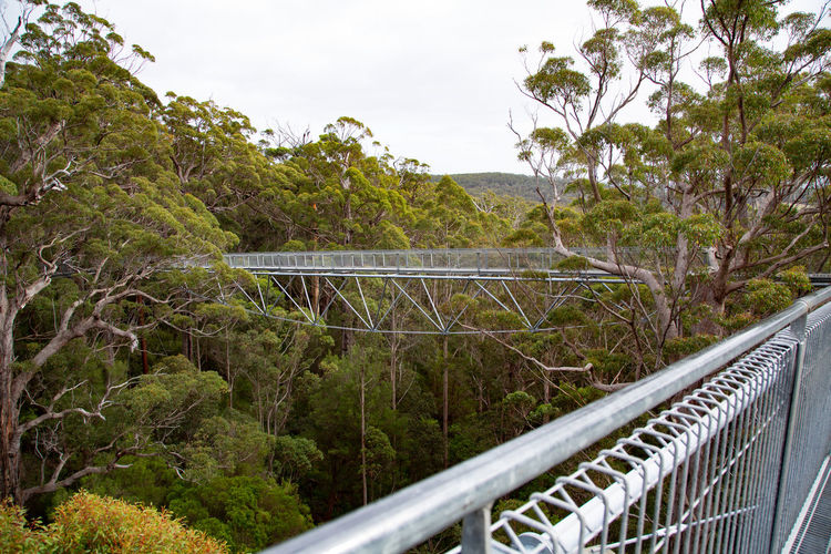 I felt so small at 40 meters from the ground! Plant Tree Railing Nature Day Transportation Bridge Sky No People Connection Architecture Growth Mode Of Transportation Green Color Metal Bridge - Man Made Structure Built Structure Outdoors Mountain Travel Footbridge Tree Top Walk