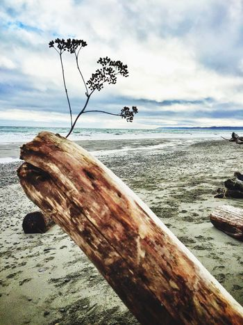 Siloette Beach Dream WhidbeyIsland