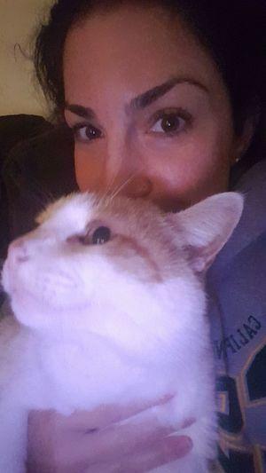 My cuddle buddy tonight. OhMyGato Gato Kitty Cat Meow Purrrr <3  Furbaby Spoiled Rotten Demanding  Handsome Boy TheBoss Dongato