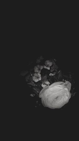 Nature Colors Black And White Black & White Beautiful EyeEm Flower Hello World