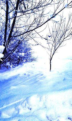 Winter Snow ❄ Landscape