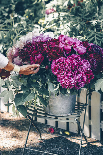 Lush beautiful bouquet of pink and purple peonies in the street . The woman's hand touches the flowers. EyeEmNewHere Paris ❤ Peonies Bloom In The Room Beauty In Nature Bouquet Bunch Of Flowers Day Floral Flower Flowering Plant Fragility Freshness Hand Holding Human Hand In Bloom Lifestyles Nature One Person Paris France Peonies Bloom Peonies In Bloom Plant Real People
