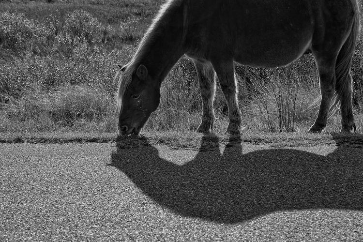 Wild pony grazing on field