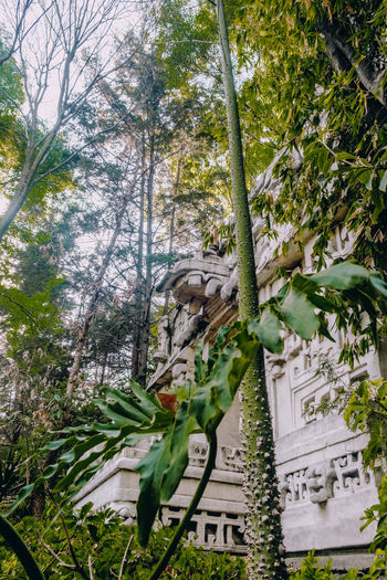 Pirámide al fondo Tree Plant Nature No People Day Architecture Growth Outdoors Building Exterior Tranquility Leaf Built Structure Land Plant Part Low Angle View Branch Forest Beauty In Nature Text Green Color