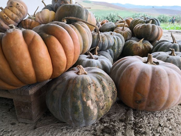 Siciliano Siciliabedda Mate10pro Sicily Fotospeciali Isola Pumpkins Pumpkin Patch Pumpkin Stack Vegetable Close-up Food And Drink For Sale
