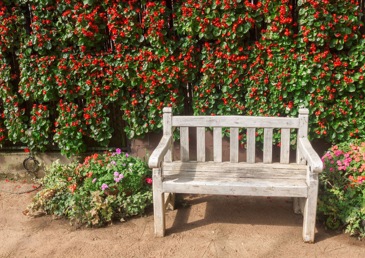 Empty bench by plants in park