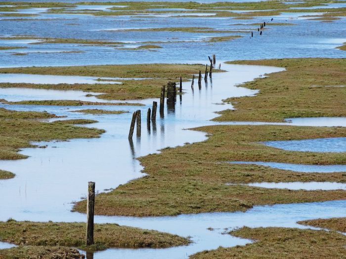 Wooden posts close to the sea. Sea Wood Wood - Material Wooden Posts Water Water Reflections Water_collection Waterfront Backgrounds Nature Grass Grassy Outdoors Taking Photos Nature_collection Nature Photography Landscape Beach Puddle Moss Wooden