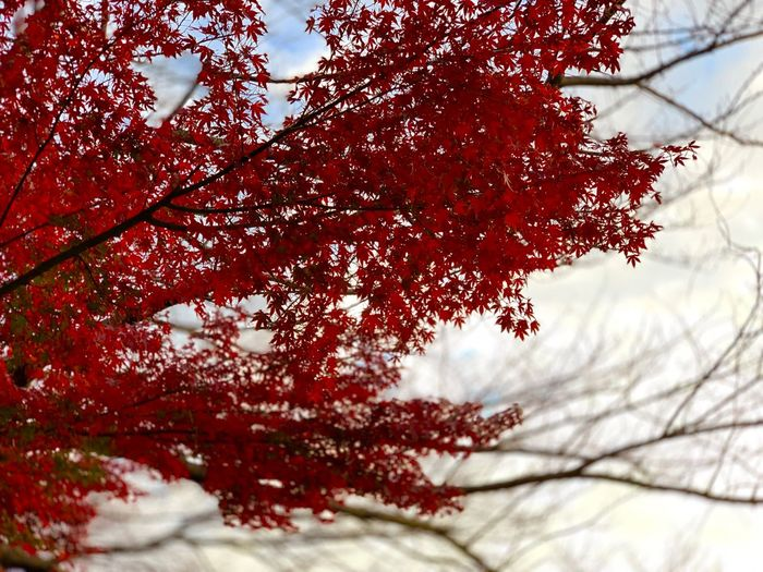 Plant Tree Red Branch Growth Nature Beauty In Nature