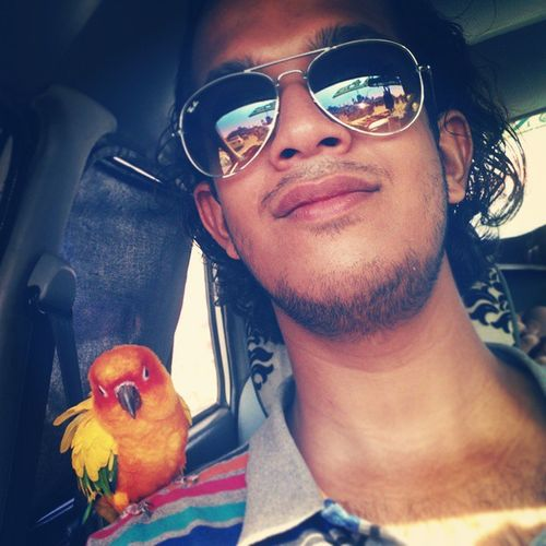 Car Selfies Playing With The Animals Beautiful Animals  Pets Sun Conures :)
