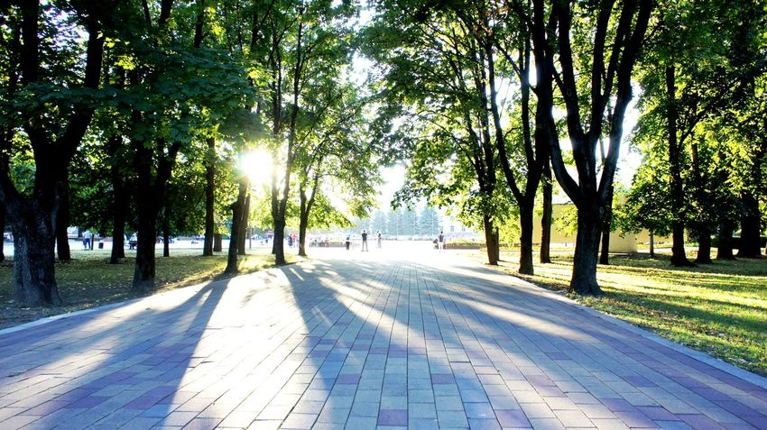 The park alley is covered with shadows of trees at sunset in Nalchik on a September day. Park, Park Bench, Place To Relax, Relaxing Peaceful, Seating, Walk, Walkway, Sidewalk, Bricks, Brick Walk, Shade Trees, Blue Sky, Blue Skies Shade Trees, Shade Tree, Perspectives On Nature Beauty In Nature Day Growth Nature No People Outdoors Scenics Shadow Sunlight The Way Forward Tranquil Scene Tranquility Tree Tree Trunk