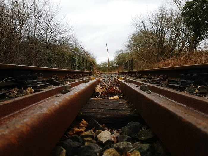 Vectors Railroad Track Transportation Rail Transportation The Way Forward Sky Outdoors Day No People Ground Level Ground Level View Parallel Lines Vanishingpoint Vanishing Point Railway Railway Track Tracks Train Tracks Transportation