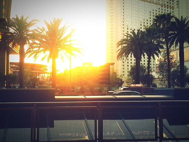 Vegas Baby Beautiful Sunset Capturing Moments  Living It Up  Palm Trees