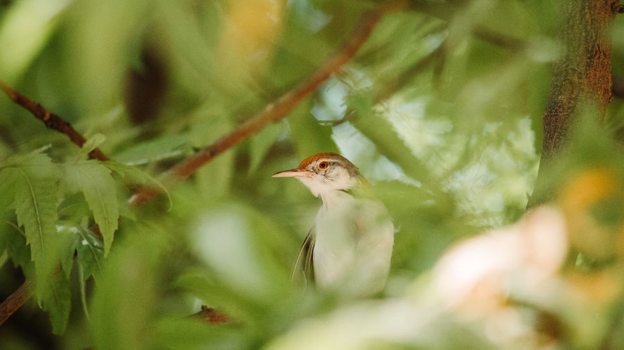 Plant Selective Focus Animals In The Wild Bird Animal Themes Animal Vertebrate Animal Wildlife No People One Animal Tree Growth Nature Leaf Plant Part Day Close-up Beauty In Nature Green Color Outdoors