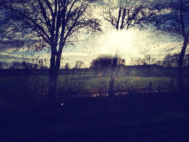 Trees Sun Nature