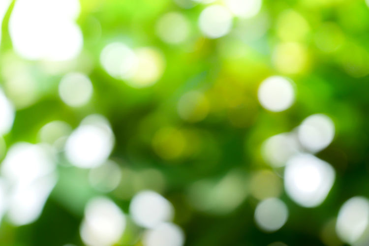 Defocused Backgrounds Green Color Abstract No People Nature Outdoors Plant Pattern Full Frame Abstract Backgrounds Light - Natural Phenomenon Shiny Day White Color Shape Close-up Glowing Beauty In Nature Illuminated Bright Soft Focus