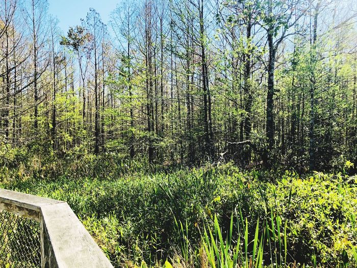 In the swamp Tree Nature Forest Tranquil Scene Tranquility No People Scenics Growth Outdoors Green Color Landscape Beauty In Nature Day Sunlight Sky Water Grass
