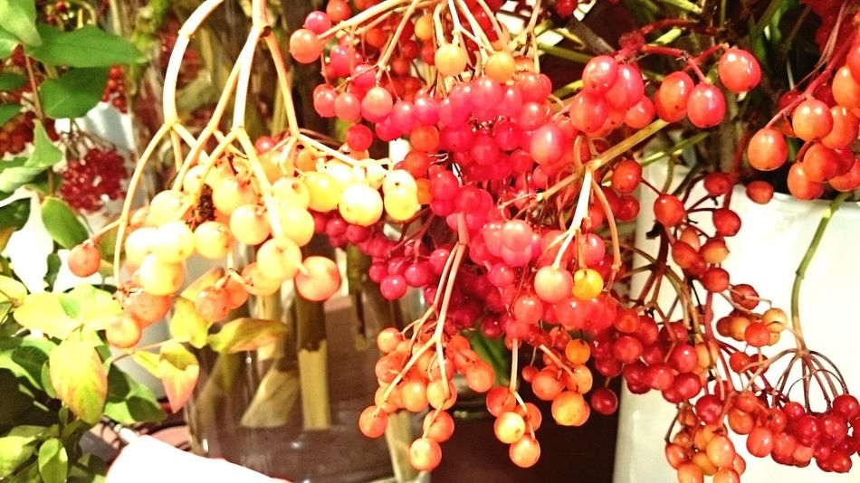 berry' Berry Berry Fruit Berries Berrypop