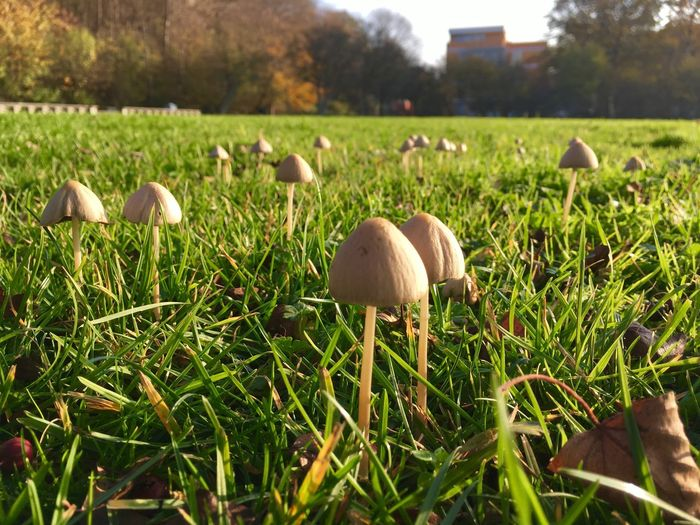 Mushrooms, perhaps magic. Mushrooms Magic Plant Grass Land Field Green Color Growth Nature Day No People Fungus Mushroom Close-up Selective Focus Beauty In Nature Focus On Foreground Outdoors Tree