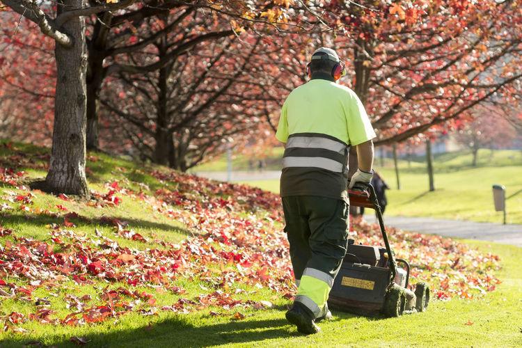 Rear view of gardener working in park during autumn