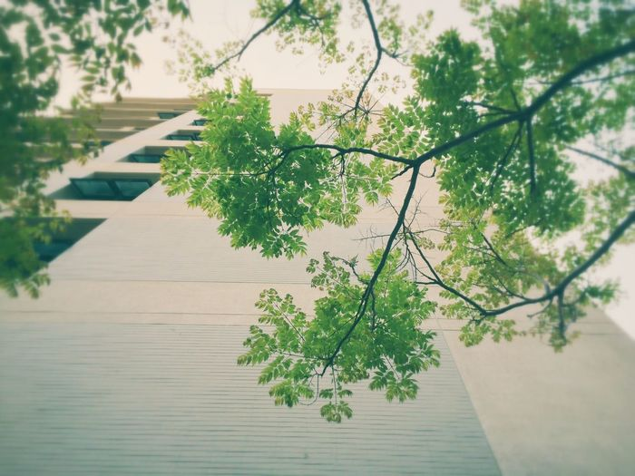 Low angle view of tree by building