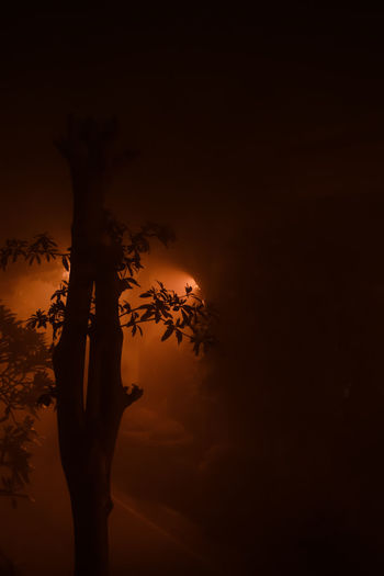 InMakin! Randomness Foggy Fog Tree Environment Weather Nature Silhouette Night
