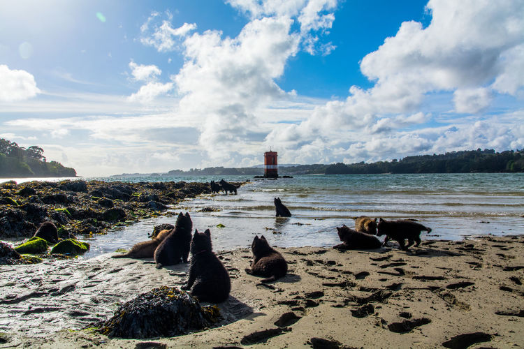 Beachphotography Sunny DayBelgian Malinois Watching The Sea Puppies Beach Rocks Sky And Sea EyeEm Best Shots Lighthouse Galicia, Spain Landscapes With WhiteWall