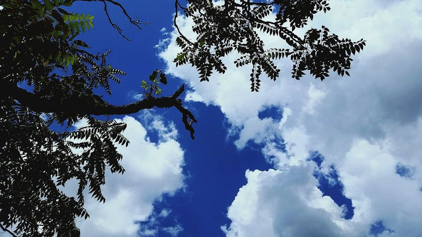 Tree Cloud - Sky Sky Nature Blue Outdoors Forest Pinaceae Beauty In Nature Day No People Pine Tree Low Angle View Branch Mountain Tree Area