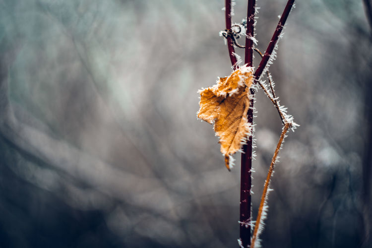 Exceptional Photographs Wintertime Frozen Nature EyeEm Nature Lover Eye4photography  Bokehlicious Bokeh Photography Poland Hanging Winter Cold Temperature Autumn Close-up Dead Plant Branch Blooming