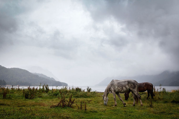 Horses grazing on field against cloudy sky