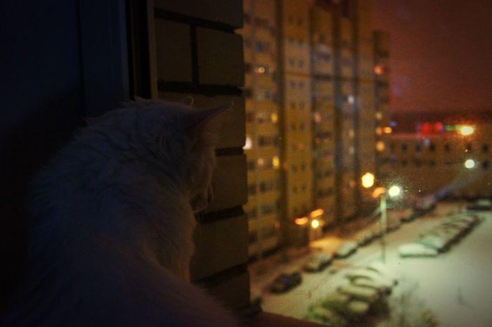Cat Night Viweoutofmywindow Window Winter Snow Russianwinter