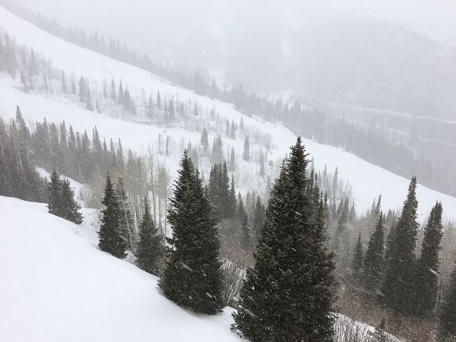 Monday morning skiing in Park City, Utah. Park City Canyons Resort Cold Temperature Snow Winter Nature Tree Weather Beauty In Nature