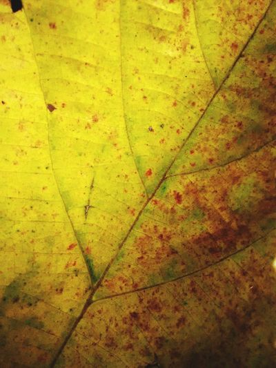 Close Up Nature Macro Nature Leaf Vein Leaf Close Up Nature Patterns Textures In Nature Yellow Leaf Fine Art