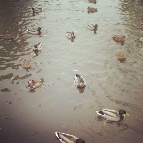 Ein paar Enten und ein fetter Wellensittich