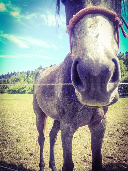 Animals Horse Horse Photography  Animal Themes Horse Life Horselovers Horse <3 Animal_collection Animal Photography Animal Nature