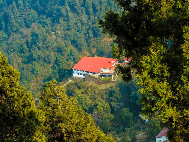 a big beautiful bungalow in middle of a dense forest.. 😍Architecture Beauty In Nature Building Exterior Built Structure Bungalow Day Environmental Conservation Forest Green Color Growth House Low Angle View Lush Foliage Mountain Mussoorie Nature No People North India Outdoors Residential Building Residential Structure Roof Tadaa Community Tree Uttarakhand