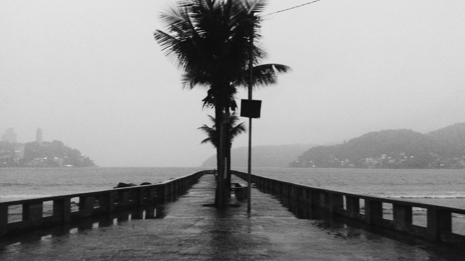 Beauty In Nature Beach Brazil São Vicente Sao Vicente Brazil Santos Sao Paulo - Brazil Blackandwhite Black & White Bw_collection Bw Society Emotional Photography Emotional Lone Loneliness Water Sea Palm Tree Outdoors Mountain Tree Day Architecture