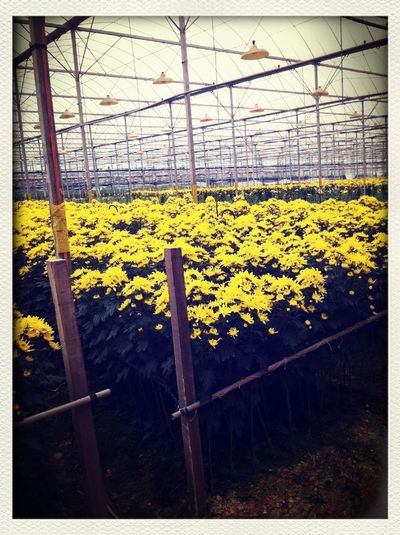 Yellow blooms ;)