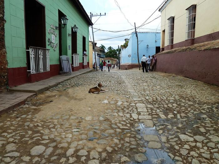 Just life: Cuba Architecture Building Exterior Built Structure Day Domestic Animals Mammal Men One Animal One Person Outdoors People Pets Real People Sky