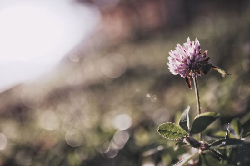 Light And Shadow Bokeh Nature Japan Vscocam Streetphotography Japanese  Flower Flowering Plant Plant Fragility Beauty In Nature Vulnerability  Freshness