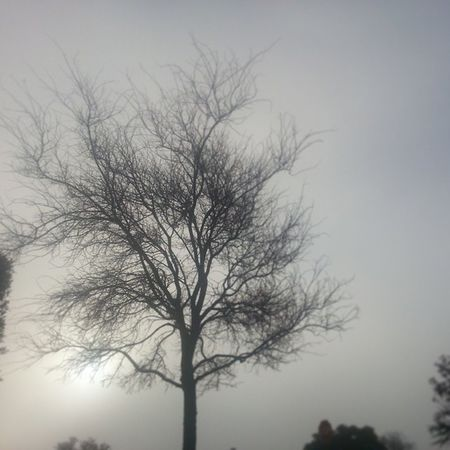 Mornin Y'all. Foggy morning here in Austintx  . Let's make it a good one.