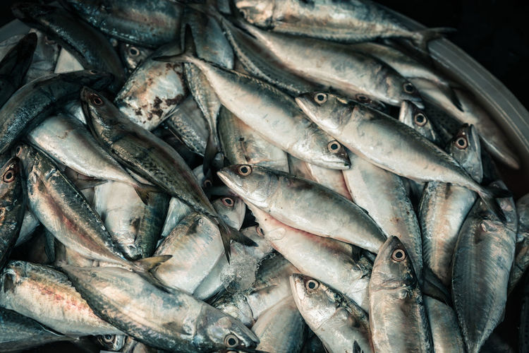 Fish Food And Drink Vertebrate Seafood Animal Freshness Food Large Group Of Objects No People Abundance Raw Food High Angle View Retail  Healthy Eating For Sale Close-up Silver Colored Wellbeing Backgrounds Market